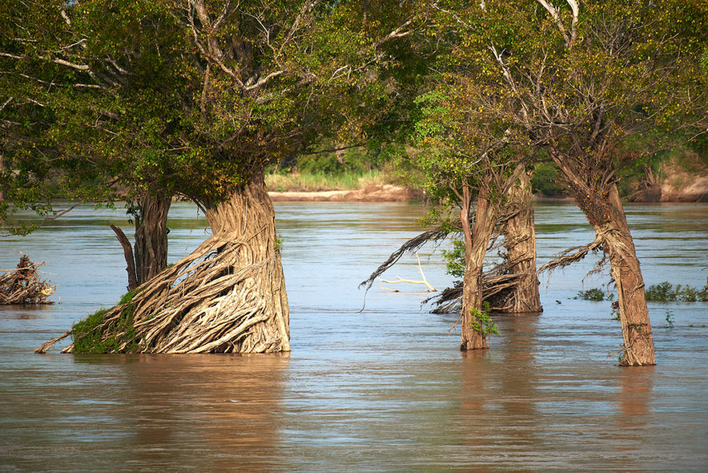 Flooded forests in Stung Treng, Cambodia