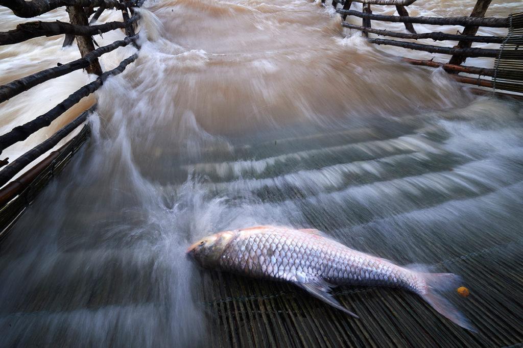 Li of fish trap at Khon Phapheng Waterfall