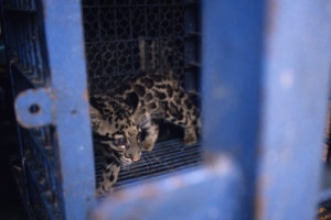Wildlife trade in Southeast Asia remains persistent despite laws and regulations in place