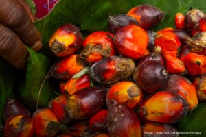 Uptake of certified palm oil increases