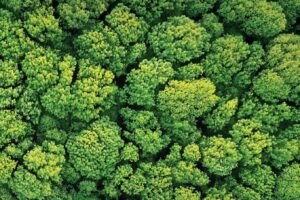 Decade on Ecosystem Restoration launched on World Environment Day